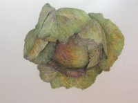 January King Cabbage Sue Creswell